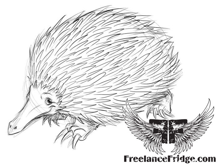 Cute Echidna Drawing How to Draw Echidna